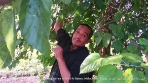 فى بركة السبع - أكل التوت البلدى _Eating Berries in Berkit Al Sabea ,AlMinufiyah , Egypt